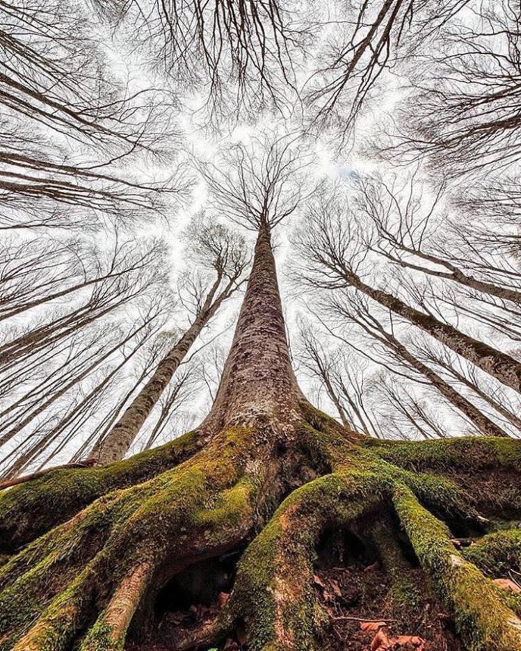 Tree for narrative