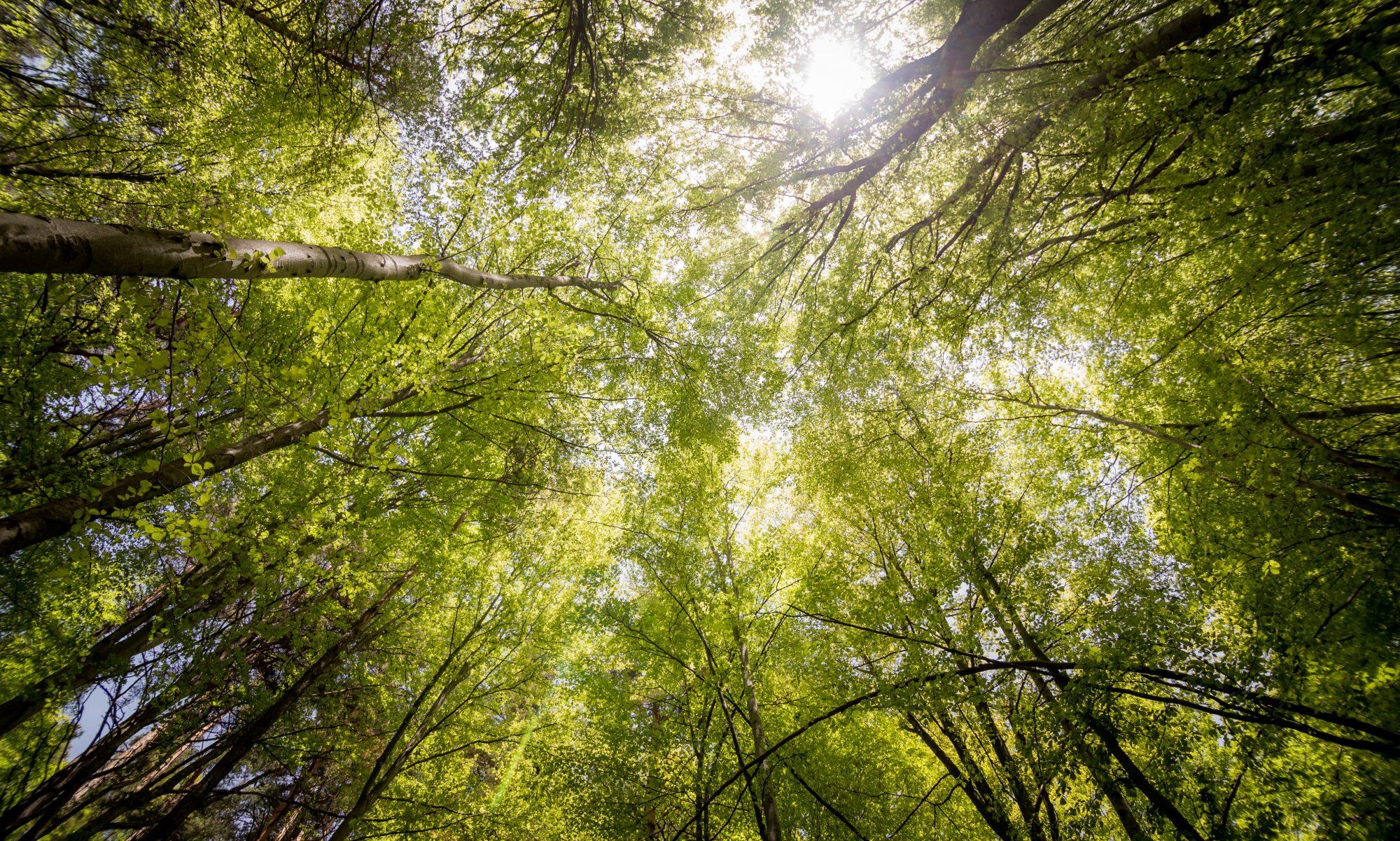 Co-creating abundance through generative change